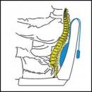 Perna pentru zona lombara Alvital